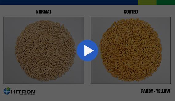 Seed Coating - Paddy