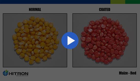 Seed Coating - Maize