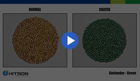 Seed Coating - Coriander